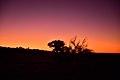 Kalahari landscape, Kalahari, Northern Cape, South Africa (20531201262).jpg