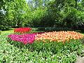 Keukenhof Garden (16).JPG