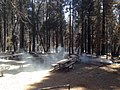 King Fire - Black Oak Group Campground (15415493015).jpg