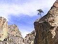 Kings Canyon National Park - panoramio (1).jpg