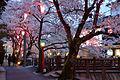 Kinosaki Onsen cherry blossoms.jpg
