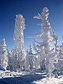 Klínovec 2013 -2 - panoramio.jpg