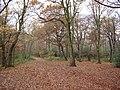 Knighton Wood in winter - geograph.org.uk - 90593.jpg