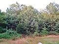 Kohlberg Pirna - panoramio (8).jpg