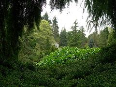 Kubota Garden 01.jpg