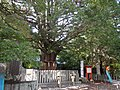 Kumano Kodo pilgrimage route Kumano Hayatama Taisha World heritage 熊野古道 熊野速玉大社08.JPG