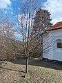 László Tőkés and Tamás Csuka memorial tree and plaque, 2020 Zebegény.jpg