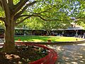 La Trobe University - Agora tree.jpg
