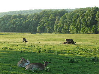Lainzer Tiergarten - A meadow near to the main gate.