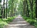Landgoed Loenen Rijksmonument 520767 tuinaanleg, de Grote Allee.JPG