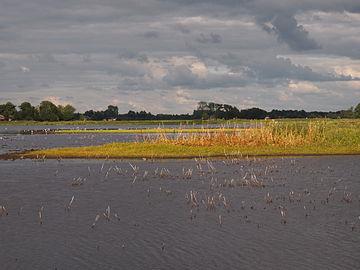 Landschap de AldeFeanen vanuit de vogelkijkhut.JPG
