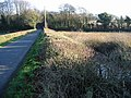 Lane and hedgerow - geograph.org.uk - 633993.jpg
