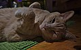 Larry the cat laying around (DSCF0914).jpg