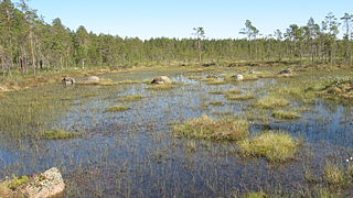 Bog Type of wetland that accumulates peat due to incomplete decomposition of plant matter