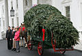 Laura Bush and the arrival of the Christmas tree.jpg