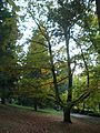Laurelhurst Park trees, November 2011.JPG