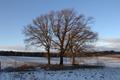 Lauterbach Wallenrod Am kalten Born NR 162165 Quercus Winter SW.png