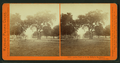 Lawn view at T.H. Selby's Residence, Fair Oaks, Cal, by Watkins, Carleton E., 1829-1916 3.png