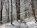 Le bois de Lauzelle, sous la neige.jpg