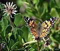 Le papillon a borboleta (3508215732).jpg