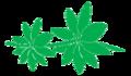 Leaf morphology whorled.png