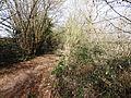 Les Écuries des Carneaux, Prinvaux, Boigneville - chaos rocheux 04.jpg