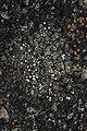 Lichen (35333445131).jpg