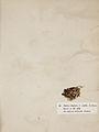 Lichenes Helvetici I II 1842 026.jpg