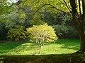Lighted Tree - panoramio.jpg