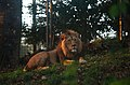Lion in the evening sun (30376196370).jpg