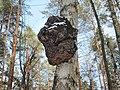Lipetsk, Lipetsk Oblast, Russia - panoramio (1).jpg