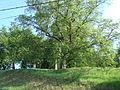 Lipové stromořadí v Rosicích.JPG