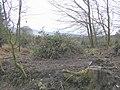 Lislear Plantation - geograph.org.uk - 137554.jpg