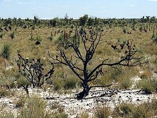 Little Desert National Park Protected area in Victoria, Australia