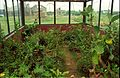 Live Butterfly Enclave Under Construction - Science City - Calcutta 1996-07-30 332.JPG