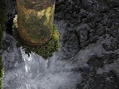 Llacuna del Samaruc (Algemesí-Parc Natural de l'Albufera) 4.jpg