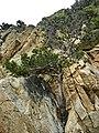 Lloret de Mar - panoramio (79).jpg