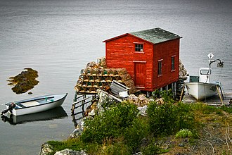 Fishing boats and lobster traps in Salvage, Newfoundland Lobsters from Salvage, Newfoundland.jpg