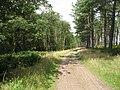 Logging road, Tentsmuir Forest - geograph.org.uk - 1453995.jpg