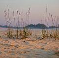 Loonse en drunense duinen sunset.jpg
