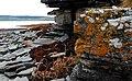 Lovely lichen - geograph.org.uk - 2074118.jpg