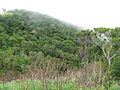 Lower edge of cloud forest, 1250 m, Mt. Cagua - ZooKeys-266-001-g011.jpg