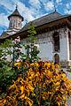 Mănăstirea Moldovița vedere laterala 5.jpg