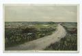 Madaket Moore (roadway on right), Nantucket Island, Mass (NYPL b12647398-74611).tiff