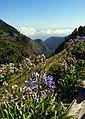 Madeira - Flickr - Stiller Beobachter.jpg