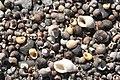 MaineOct2010 021 (5085712345).jpg