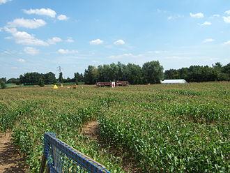 Corn maze - Millets' Maize Maze 2007, Millets Farm Centre, Oxfordshire, UK