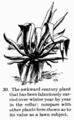 Manual of Gardening fig030.png