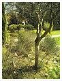 March Spring Botanischer Garten Freiburg - Master Botany Photography 2013 - panoramio (102).jpg
