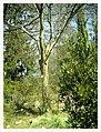 March Spring Botanischer Garten Freiburg - Master Botany Photography 2013 - panoramio (115).jpg
